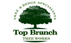 top branch tree works chichester